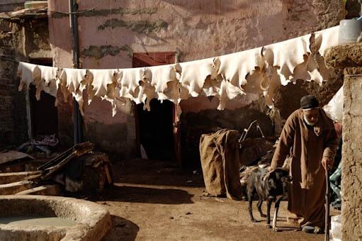 Préparation du cuir dans une tannerie de Marrakech, séchage des peaux