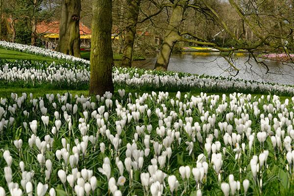 Amsterdam : Parc du Keukenhof  Photo : Nicolas Monnot