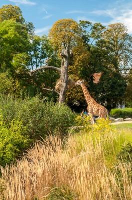 Zoo Parc de la Tête d'Or à Lyon