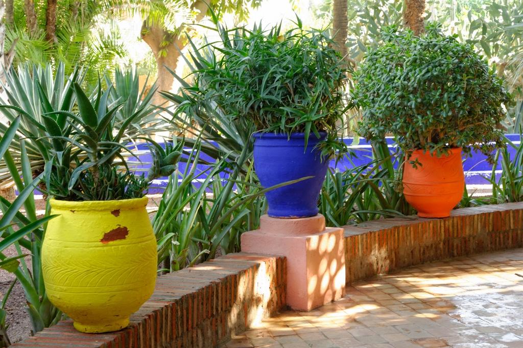 Carnets de voyages le jardin majorelle marrakech for Jardin majorelle
