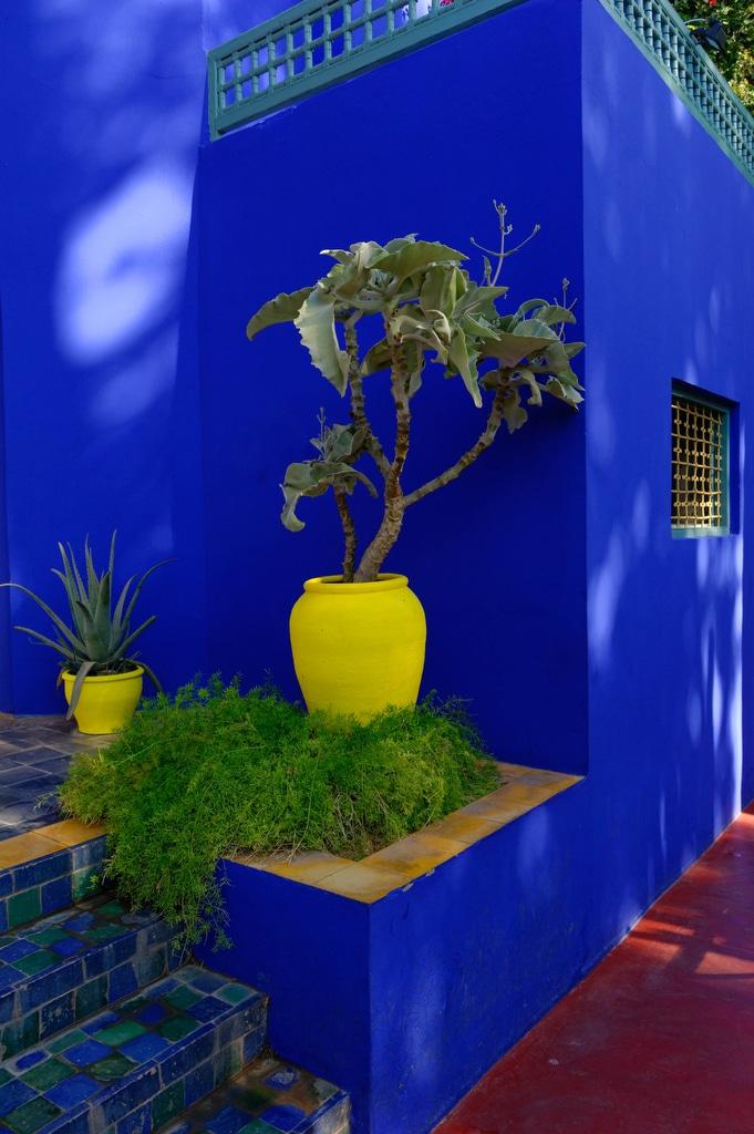 Carnets de voyages le jardin majorelle marrakech for Le jardin majorelle