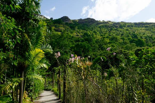 Jardin du Sleeping Giant aux iles Fidji