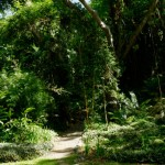 Jardin du Sleeping Giant - Fiji
