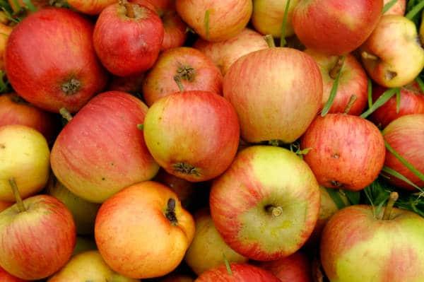 Pommes et fromages de Normandie