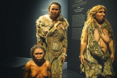 Musée des confluences : Les origines de l'Homme