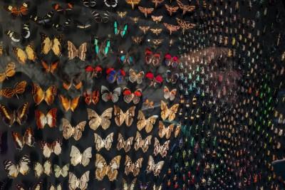 Musée des confluences : Espèces, la maille du vivant