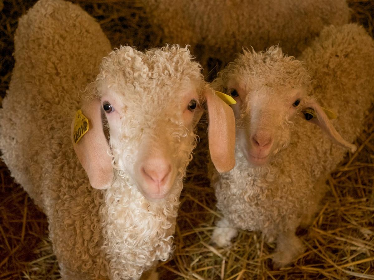 vacances à la ferme en famille : nourrir les animaux